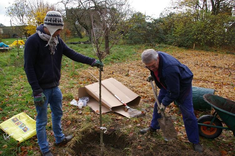 plantation cerisier